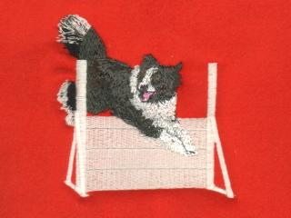 Border Collie Over High Jump